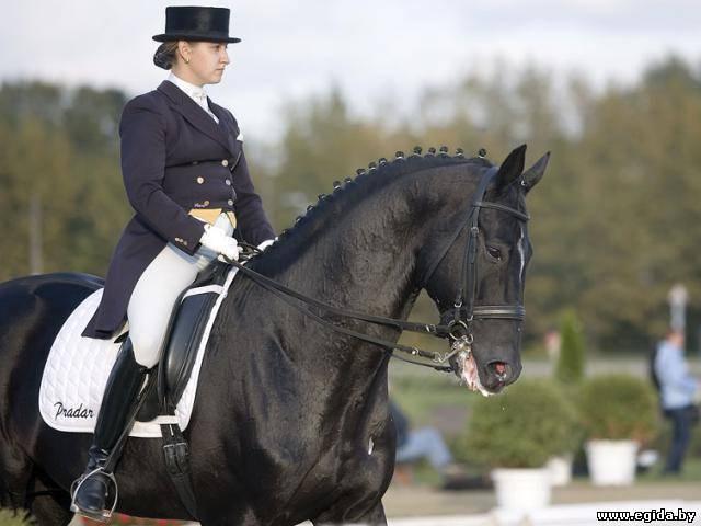 Как правильно ездить на лошади