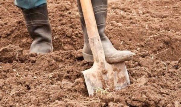 Какую почву любит капуста белокочанная. особенности посадки: главные этапы и правила