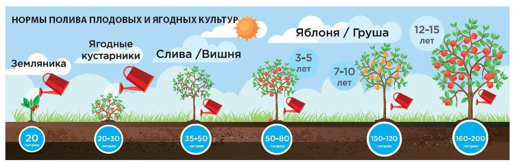 Орошение сада: правильный полив плодовых деревьев