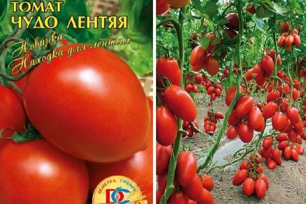 7 самых урожайных сортов томатов