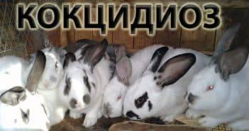 Чем проглистовать кроликов