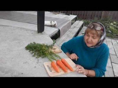 Как посадить морковь чтобы она быстро взошла