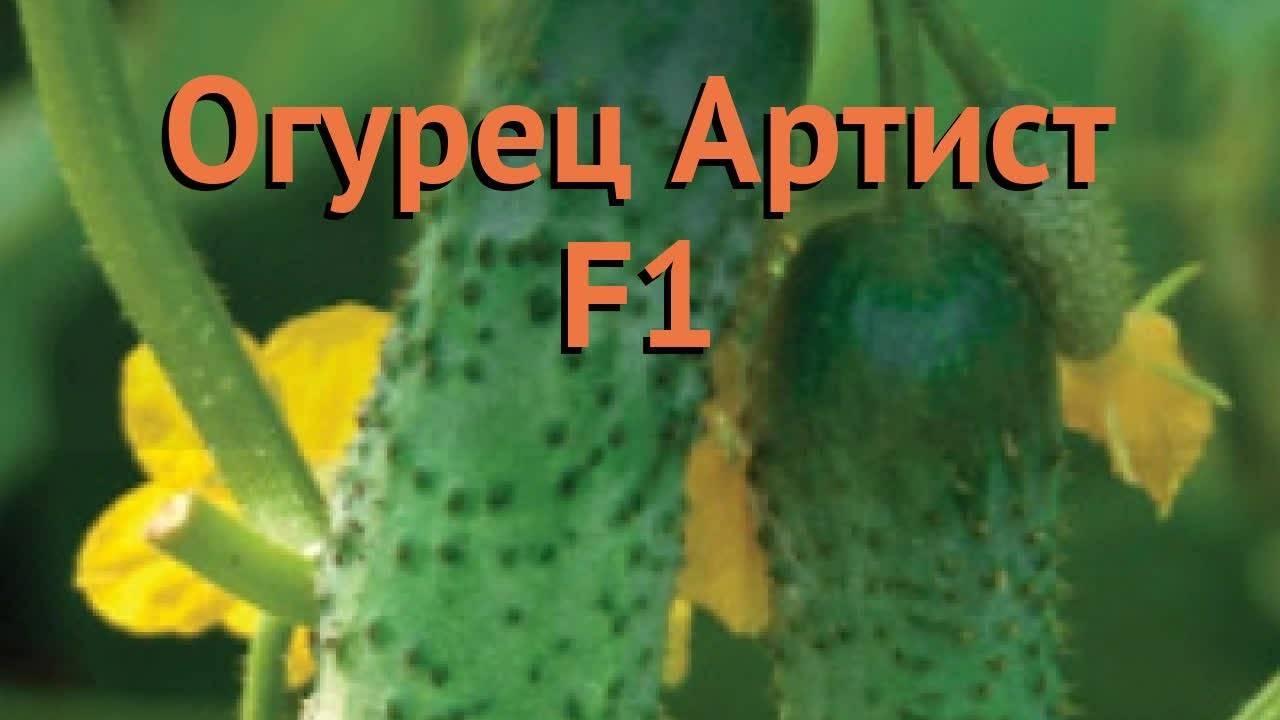 Огурец лютояр f1: описание