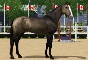 Какую скорость может развивать лошадь