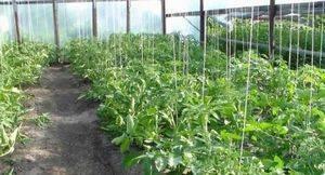 Сетка для огурцов: как правильно натянуть, установить и использовать для подвязки и выращивания овощей (95 фото + видео)