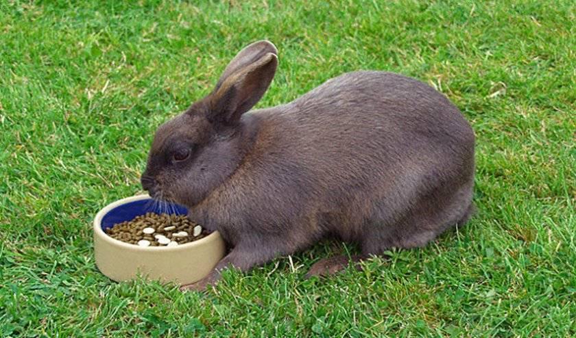 Как спасти кролика если он умирает. причины гибели кроликов и способы их решения. как уберечь кроликов от гибели