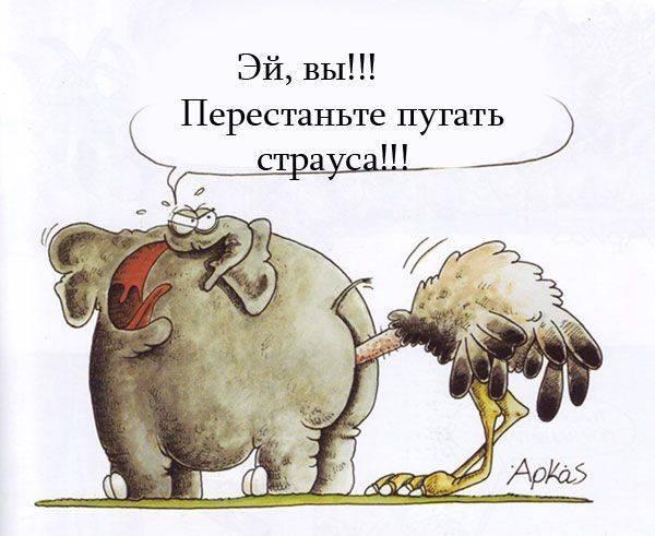 Почему страус прячет голову в песок? правда ли это?