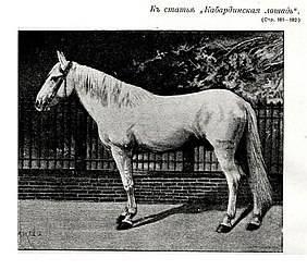 Кабардинская порода лошадей — гордость кавказа