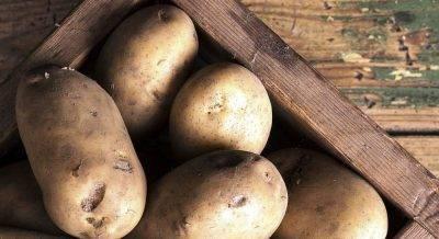 Сорт картофеля «нандина (nandina)» – описание и фото