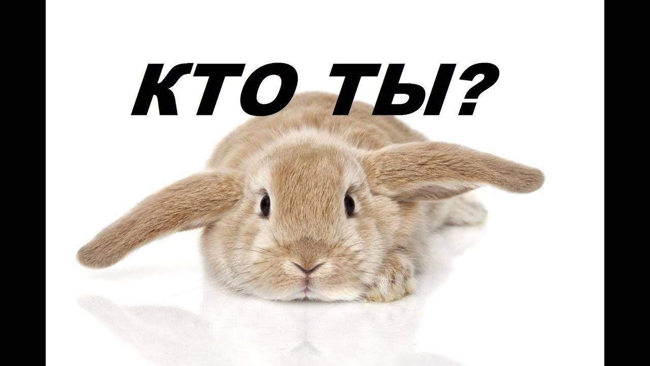 Как определить пол кролика начинающему кролиководу