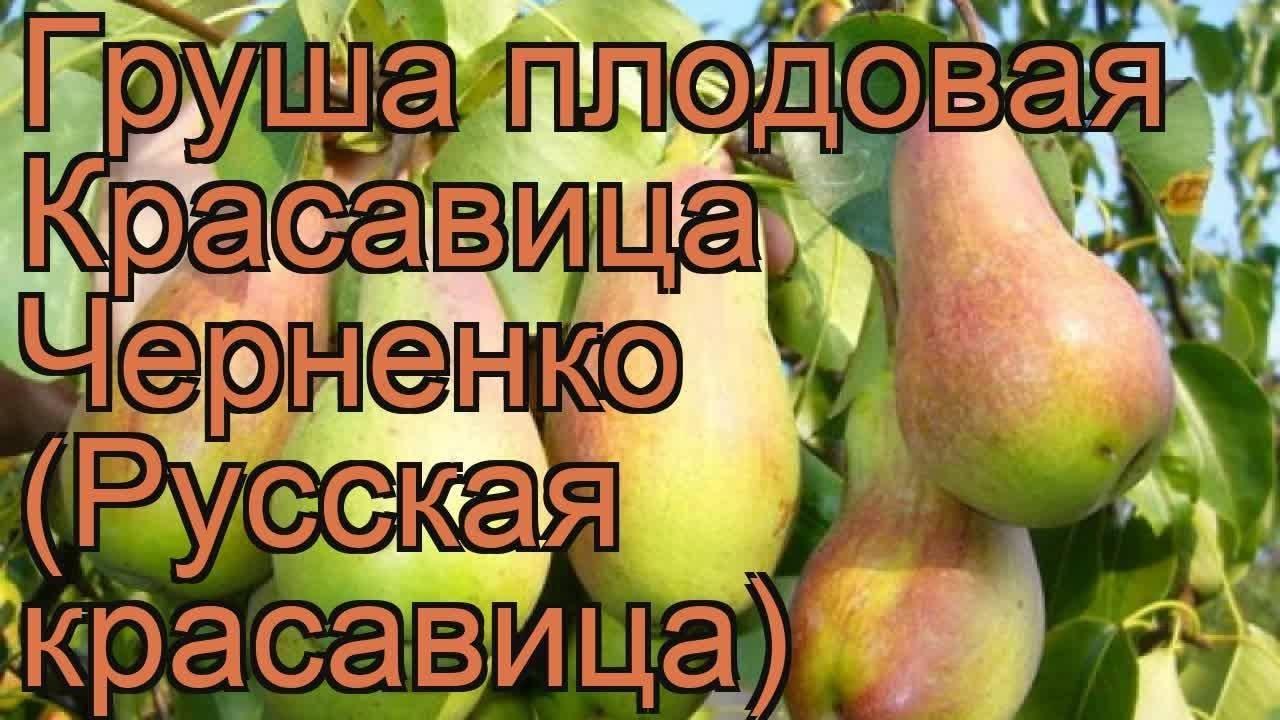 Груша русская красавица: описание и характеристика сорта, достоинства и недостатки, особенности посадки и ухода + фото и отзывы