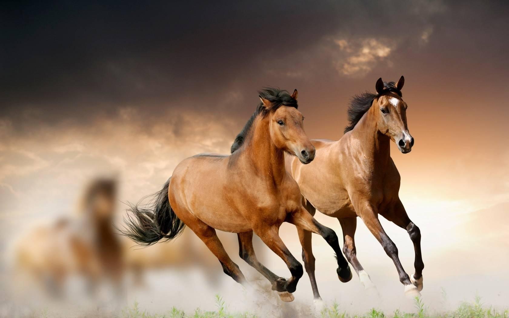 Аллюры лошадей – характеристики и виды 2020