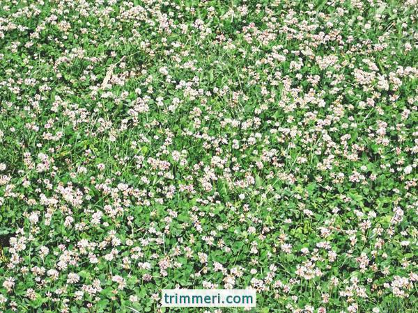 Скажем магазинам нет: семена каких трав можно ежегодно получать самостоятельно