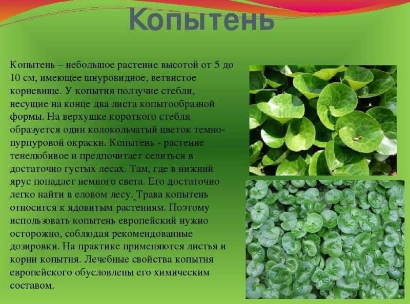 Значение оберега одолень трава