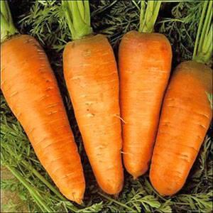 Когда сеять морковь в открытый грунт: сроки посадки, лучшее время для правильного размещения семян на урале и в других регионах, в какие дни можно исходя из погоды?