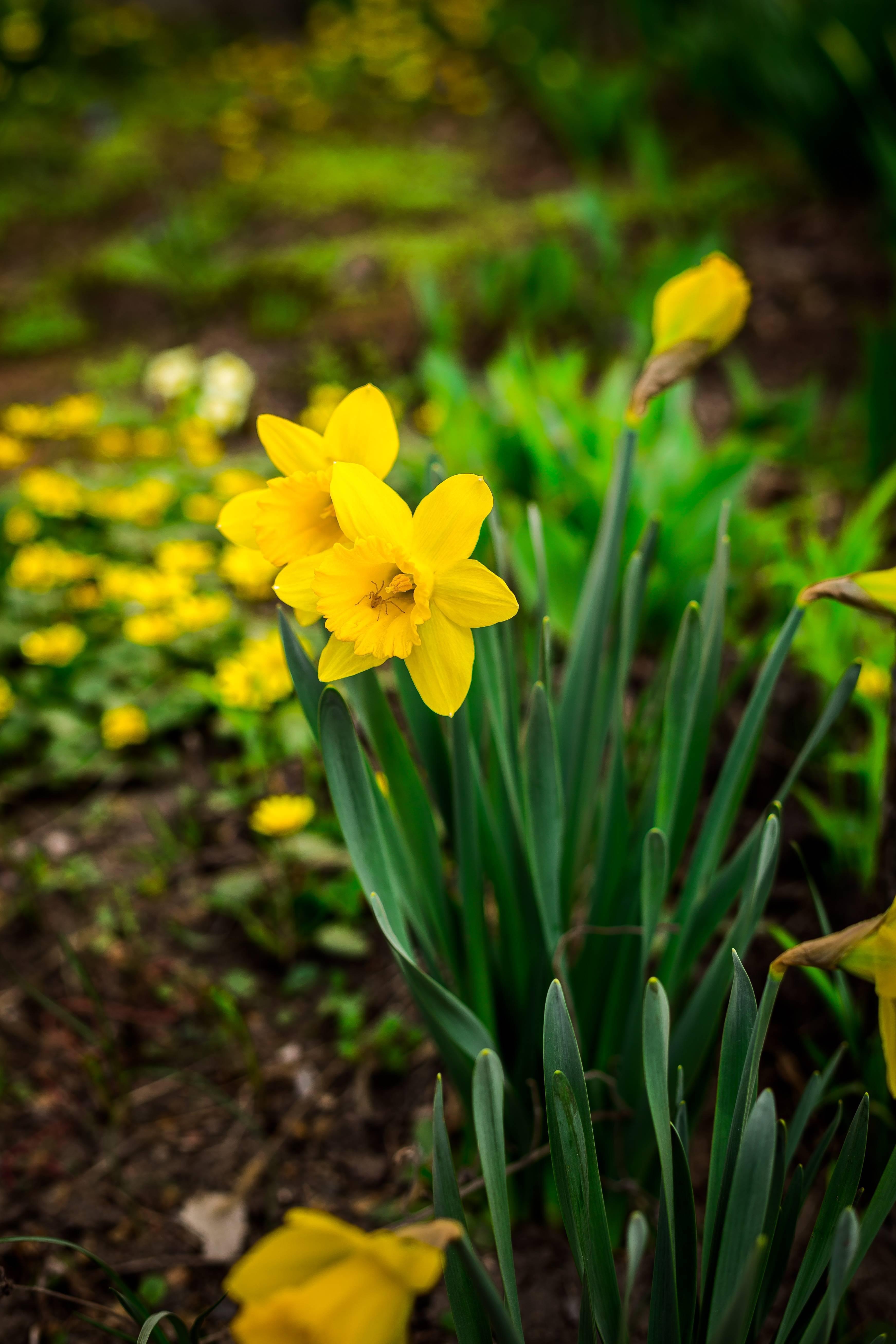 Почвопокровные цветущие растения-многолетники