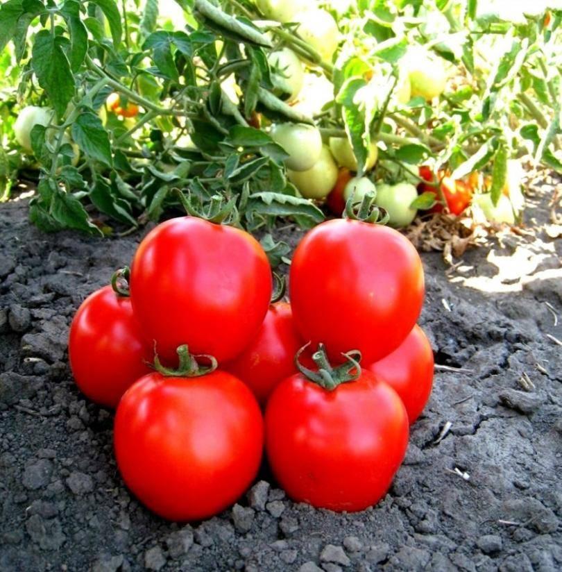 В чем замачивать семена перед посевом?