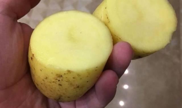 О картофеле накра: описание семенного сорта, характеристики, агротехника