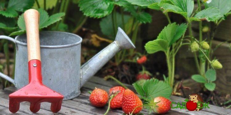 Калийные удобрения – что это такое, их названия, значение и применение