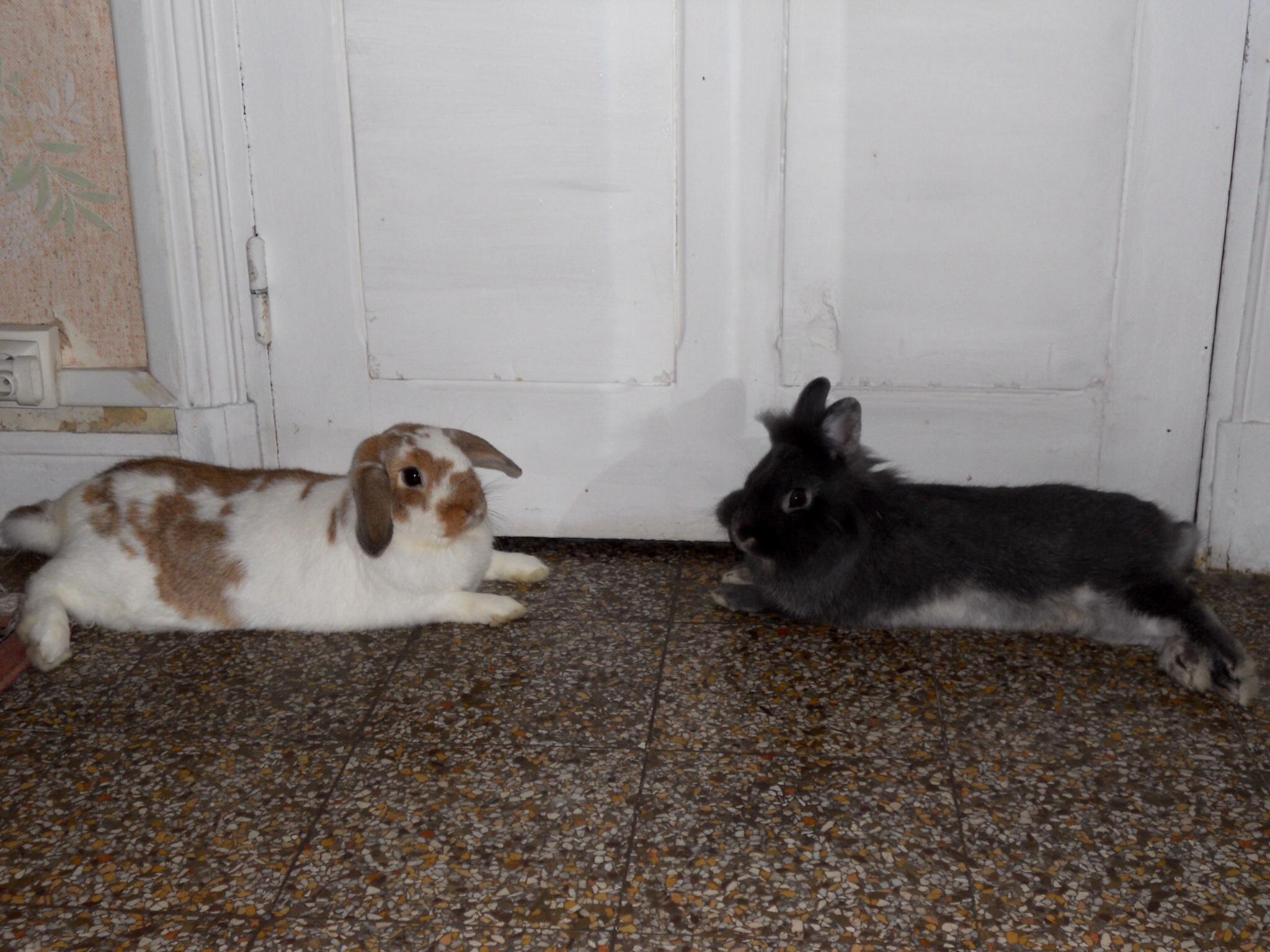 Как уберечь кролика от жары ️