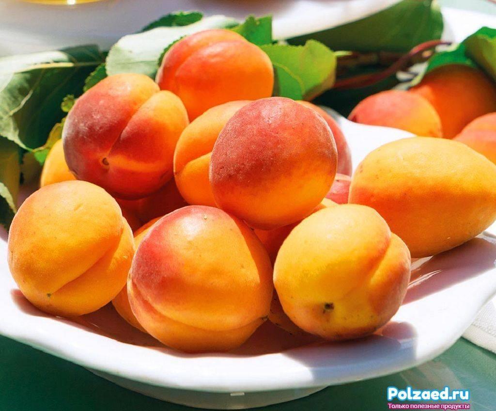 Когда и чем полезно подкормить абрикос для плодоношения. чем подкормить плодоносящую сливу и абрикос, чтобы плоды были крупнее