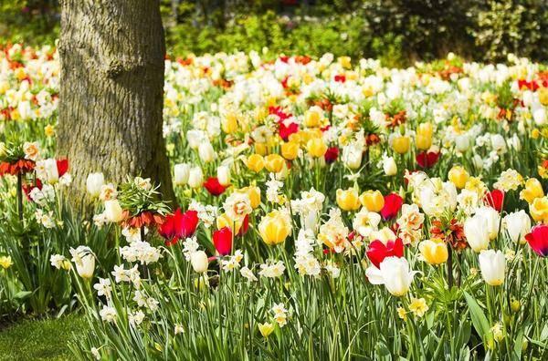 Какие садовые растения нельзя сажать рядом?