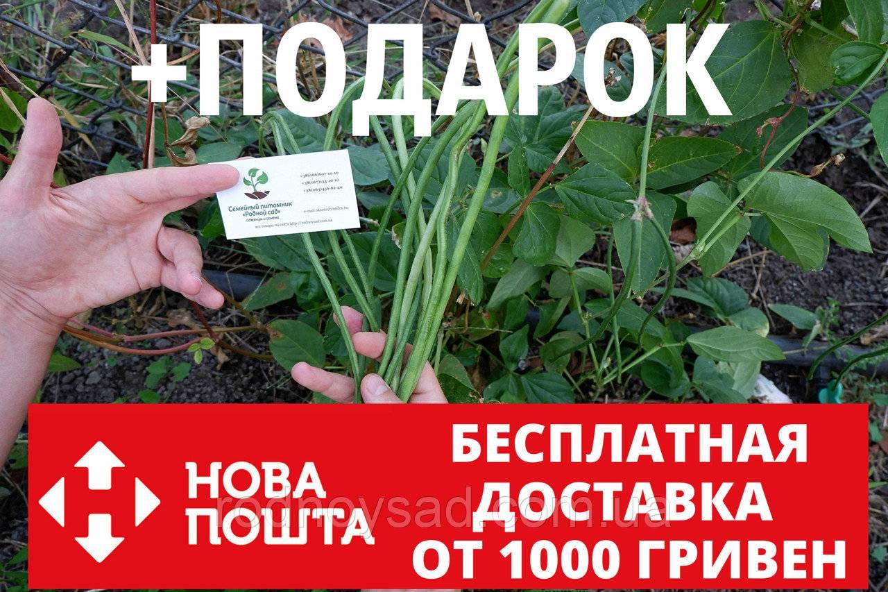 Что такое вигна: выращивание, отзывы, фото