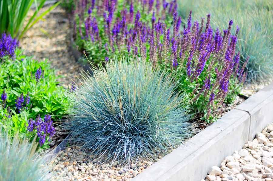 Почвопокровные растения для сада (37 фото): выбираем многолетние и однолетние стелющиеся цветы для клумб, растения в ландшафтном дизайне