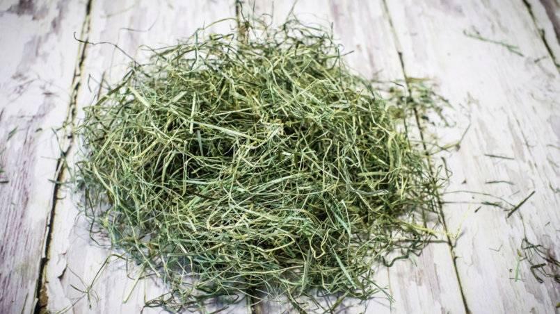 Можно ли кроликам давать хвойные ветки: сосны, ели, в каких количествах