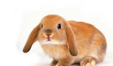 Как стричь когти кролику?