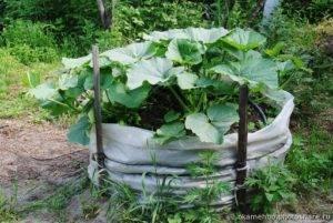 Все о тыквах: от выбора семян до хранения урожая