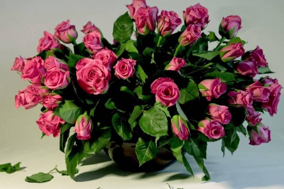 Как посадить отростки розы в домашних условиях?