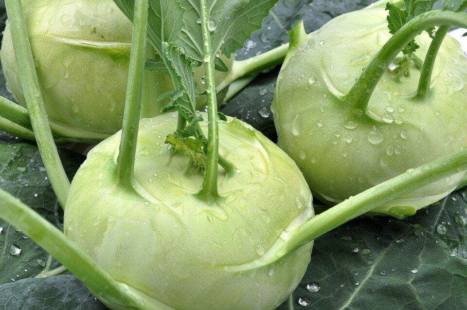 Капуста кольраби. рецепты. полезные свойства и противопоказания