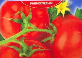 Выращивание томатов на двух корнях: описание метода, плюсы и минусы, посадка и аблактировка помидоров, а также как ухаживать за овощем с соединенными стеблями?