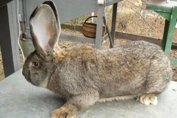 Болезни кроликов: причины, симптомы, лечение, профилактика