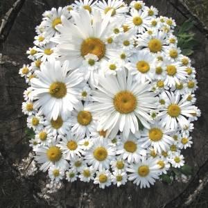 Цветы символика и значение
