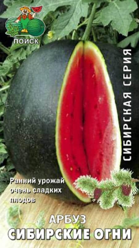 Все об арбузе Сибирские огни: описание сорта, выращивание в Сибири