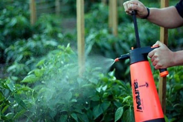 Борная кислота для помидоров и огурцов