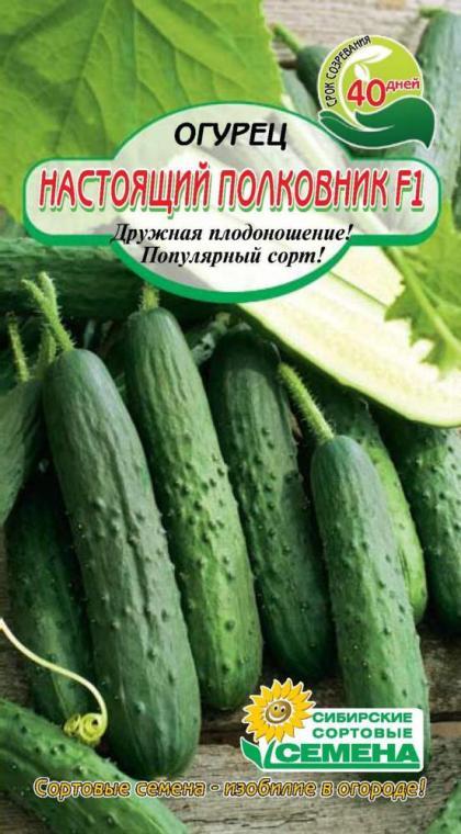 Огурец настоящий полковник f1: высокая урожайность и универсальное использование