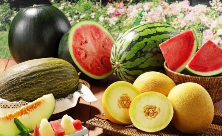 Дыня это ягода или фрукт — что такое дыня и как она влияет на организм человека. советы по выбору дыни и биологическое описание (125 фото)