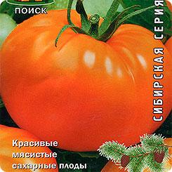 Томат алтайский: разновидности сорта и 3 этапа выращивания