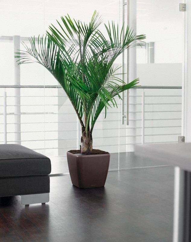 Лучшие виды вьющихся и ампельных комнатных растений в домашнем интерьере