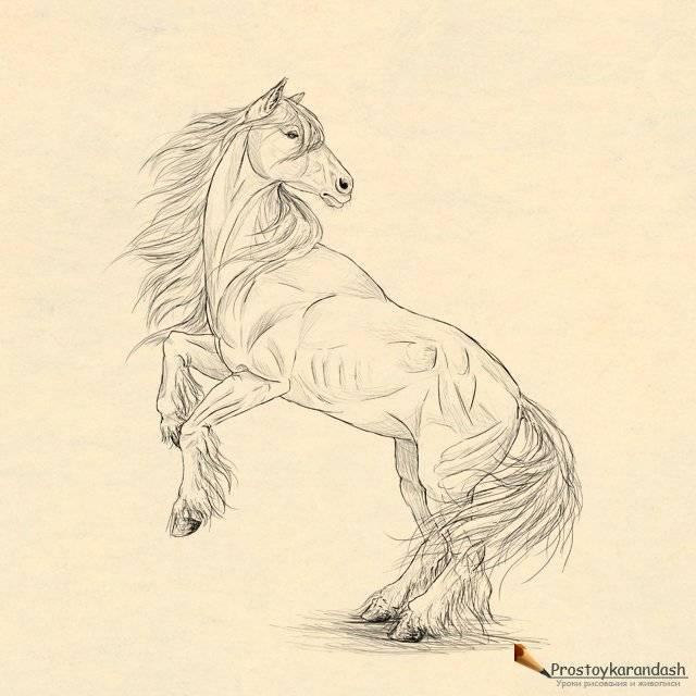 Галоп — аллюр лошади