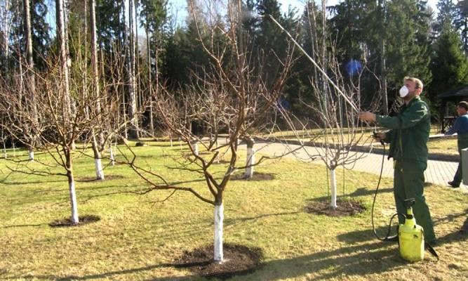 Обработка груши весной от вредителей и болезней, чем опрыскивают весной