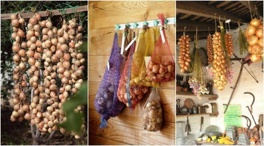 Как сохранить репчатый лук на зиму