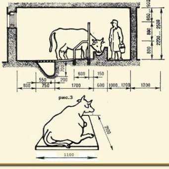 Как правильно построить коровник