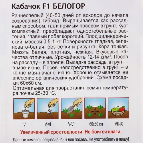 Белоплодный кабачок: сорта, пошаговый посев и уход