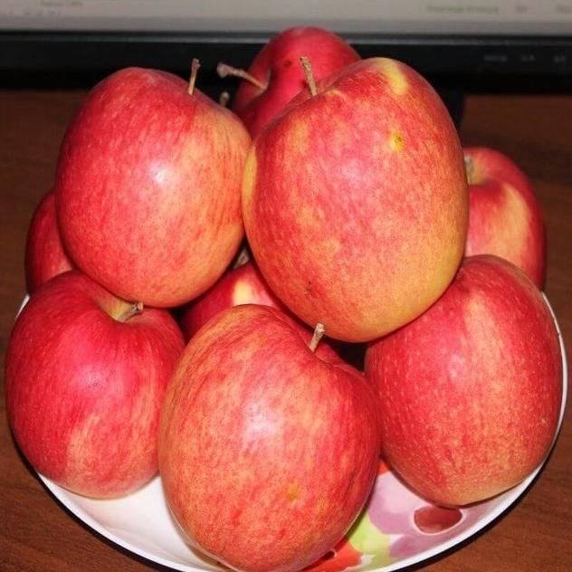 Яблоня лигол: описание, преимущества и недостатки сорта, характеристика плодов, правила посадки и ухода, сбор и хранение урожая