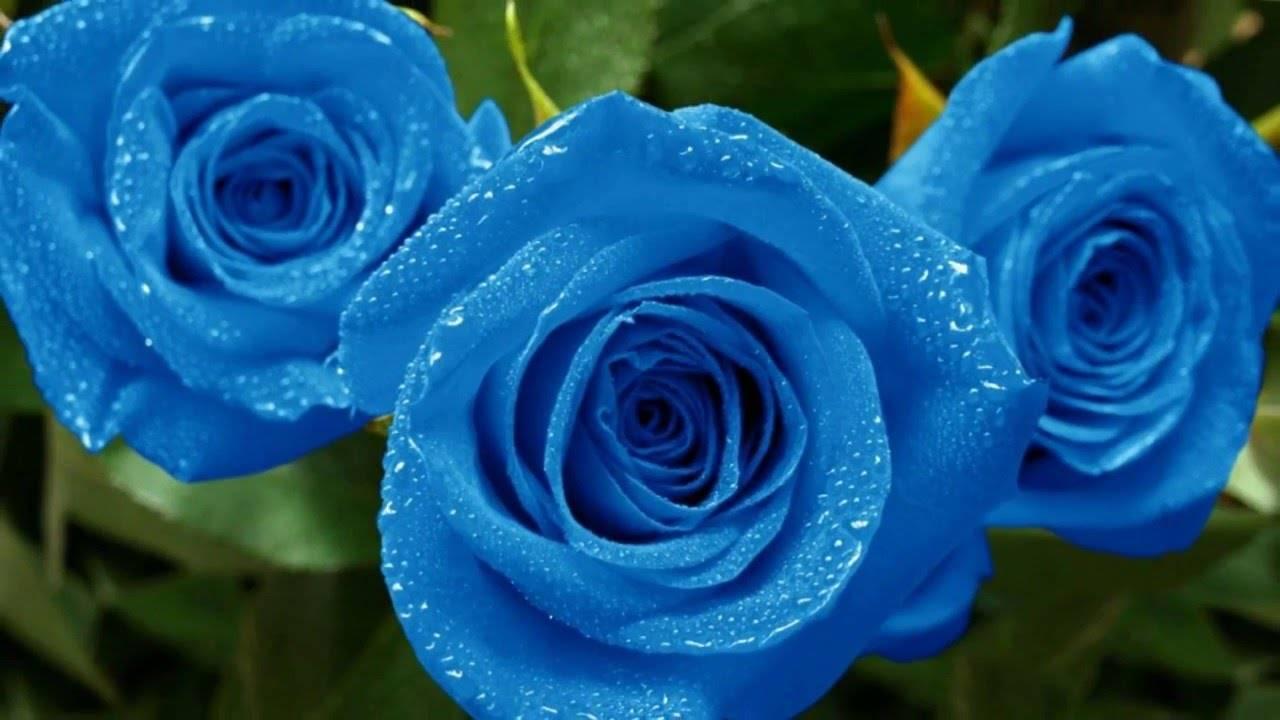 Самые дорогие и редкие цветы со всего мира: топ 10