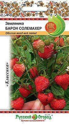 Земляника сорт александрия: красивые ягоды, вкусный урожай